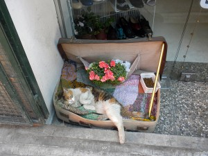 I found this adorable cat, enjoying a lazy Monday afternoon, in Cihangir. The neighborhood (which is my 'hood, by the way), is famous for its beloved street cats. And, as you can see, people really do love them.